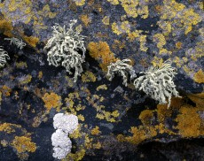 Lichen Photo Set